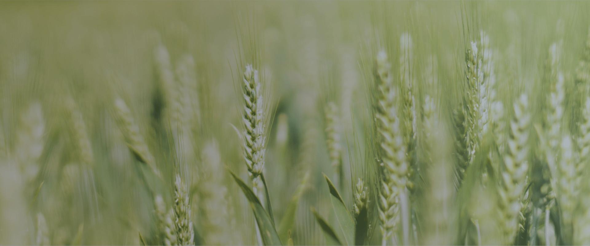 3 Segmentos que lideran la implementación de Tecnología en el Agro